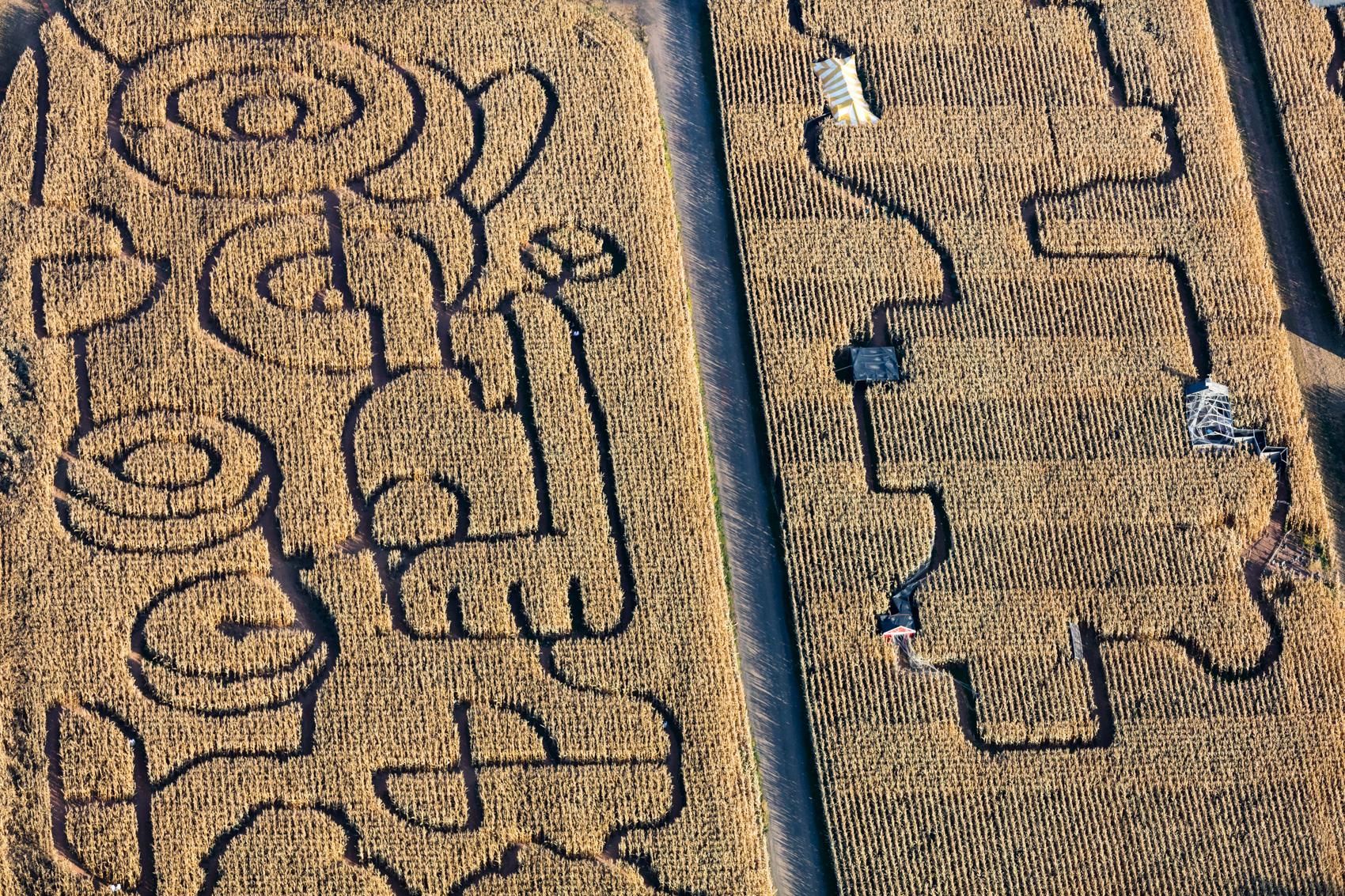 Tractor Maze, Somerset County, NJ 2016 (161019-0480)