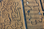 Tractor Maze, Somerset County, NJ 2016 (161019-0480)