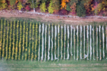 Blown Vineyard Cover, Lincoln, MA 2016 (161025-0368)