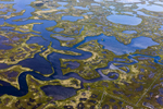 Barnegat wetlands, Barnegat Township, New Jersey 2018 (180904-0364)