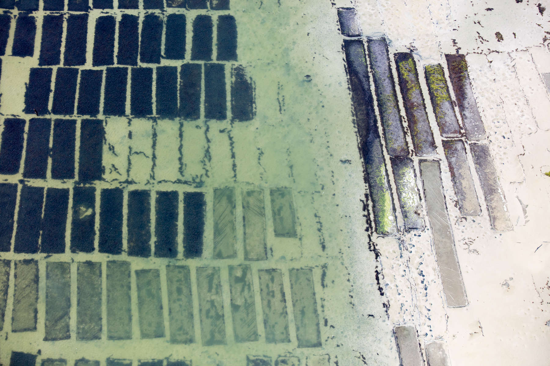 Living Oyster Beds, Cape Charles, Virginia 2018 (180905-0143)