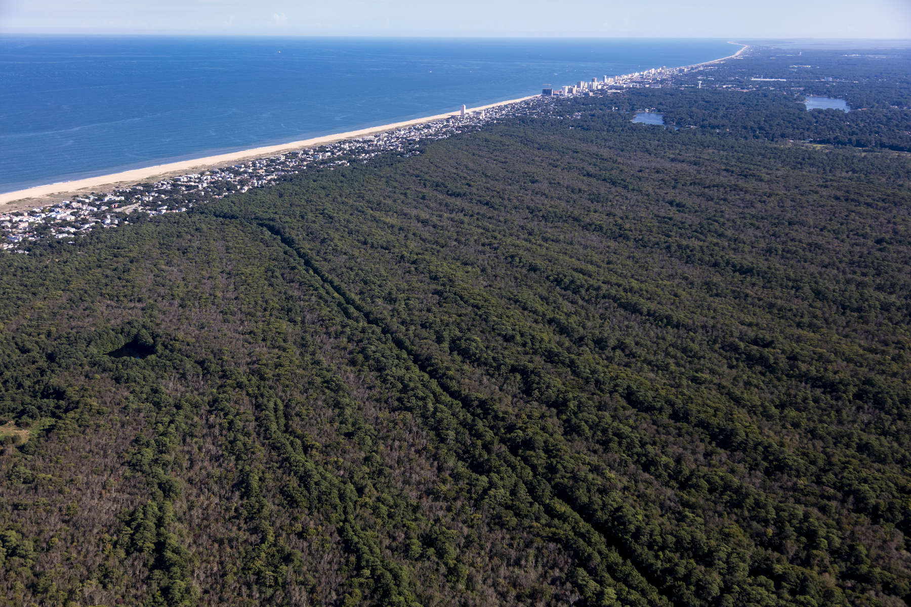 Forested Beach Ridges, Virginia Beach, Virginia 2018 (180905-0415)