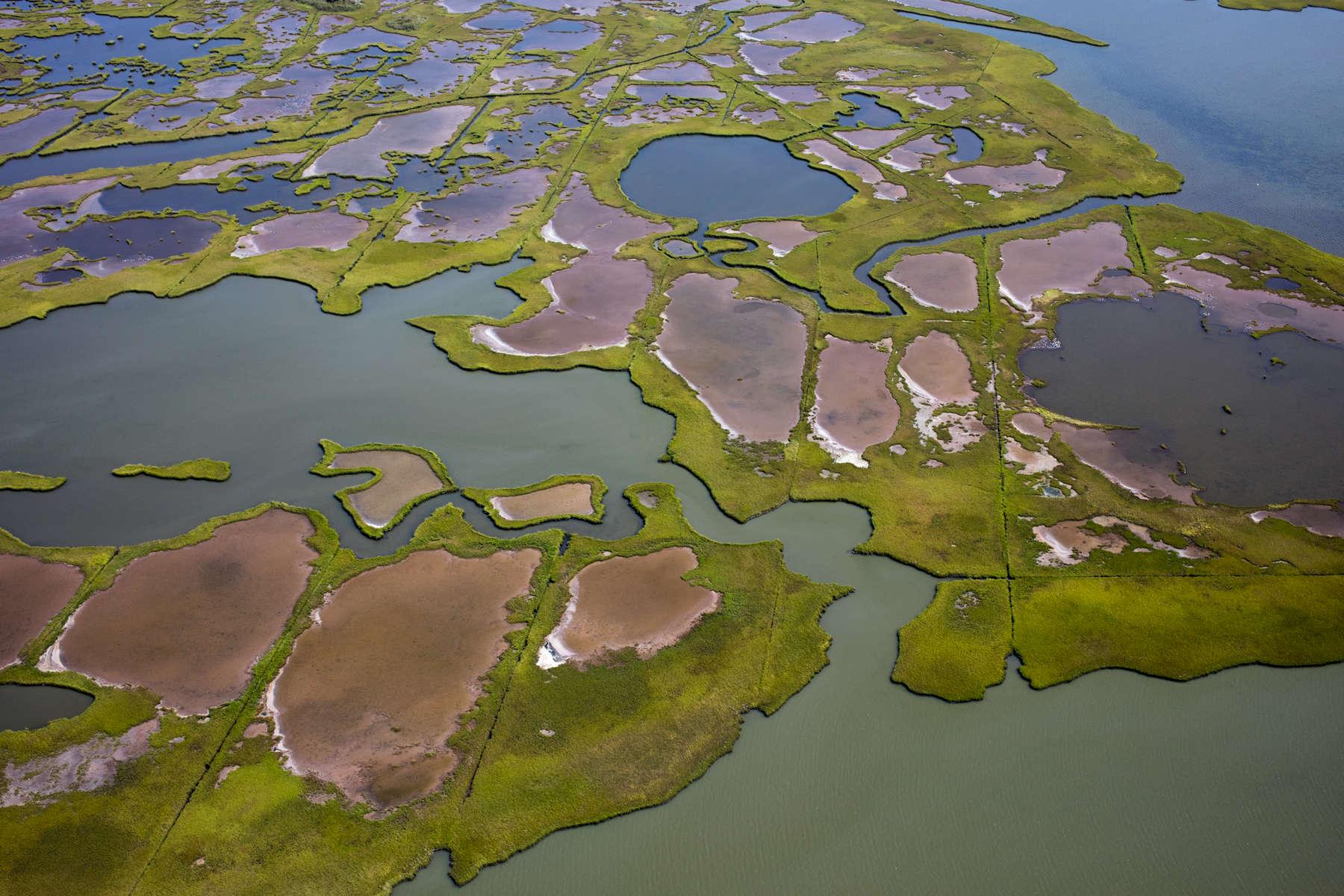 Wetland Marsh Ponds, Berlin, Maryland 2018 (180906-0172)