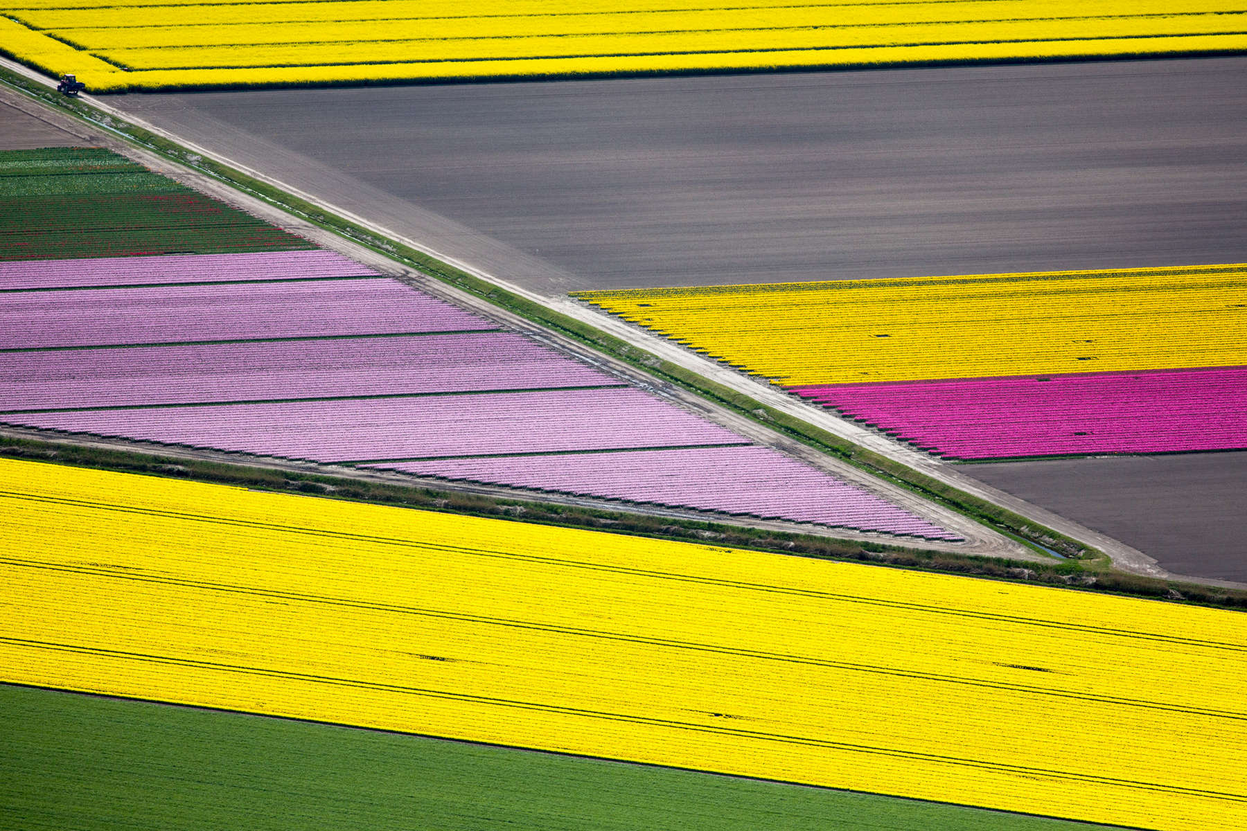 Diagonal Flower Fields, Netherlands 2015 (150502-0165)