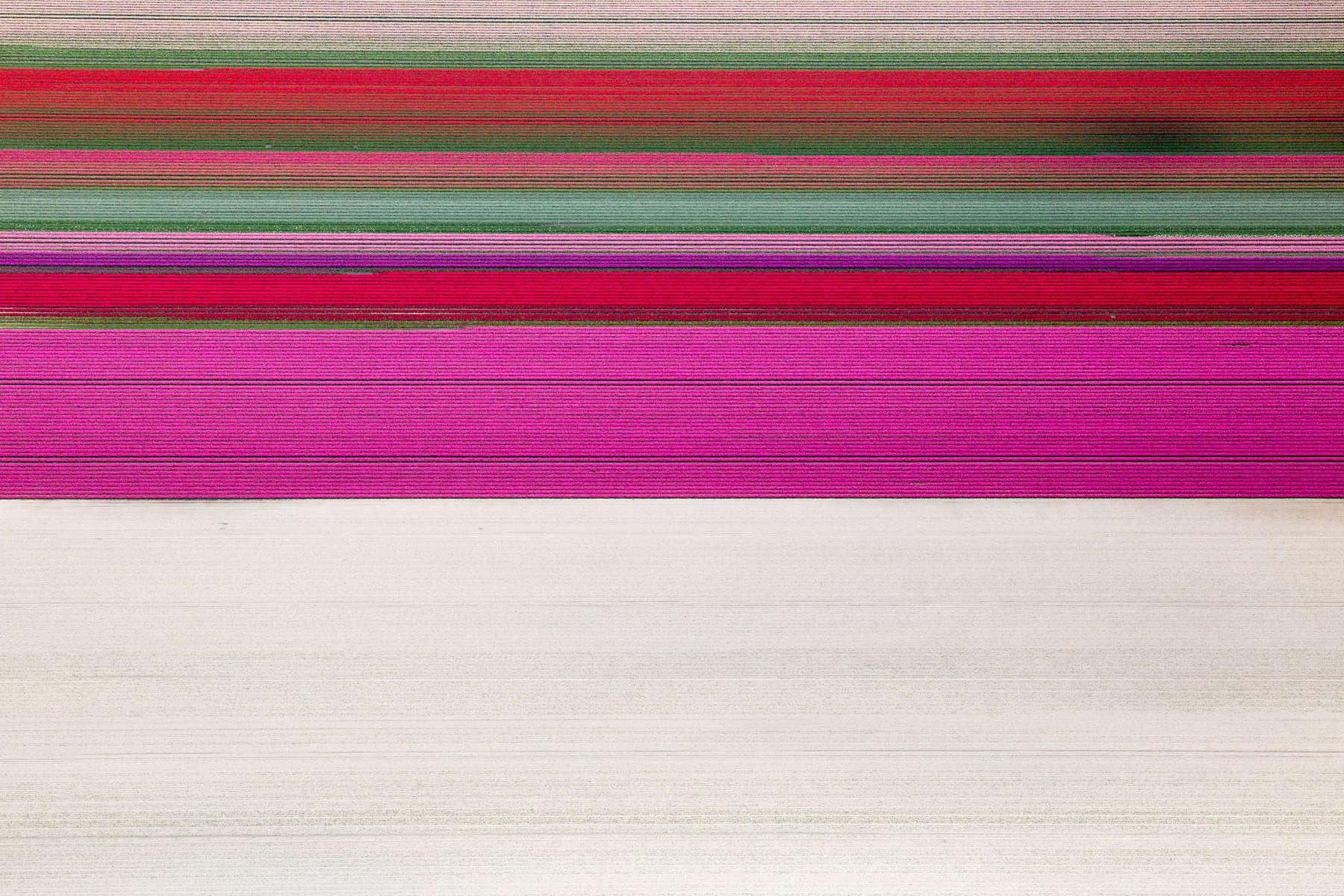 Tulip Bands, Rutten, Netherlands 2015 (150502-0186)