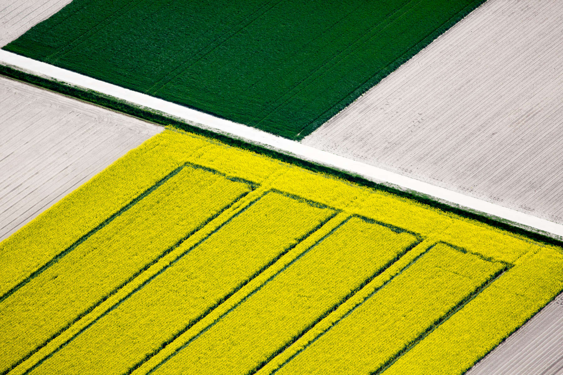 Tulip Field Divide, Netherlands 2015 (150510-0087)