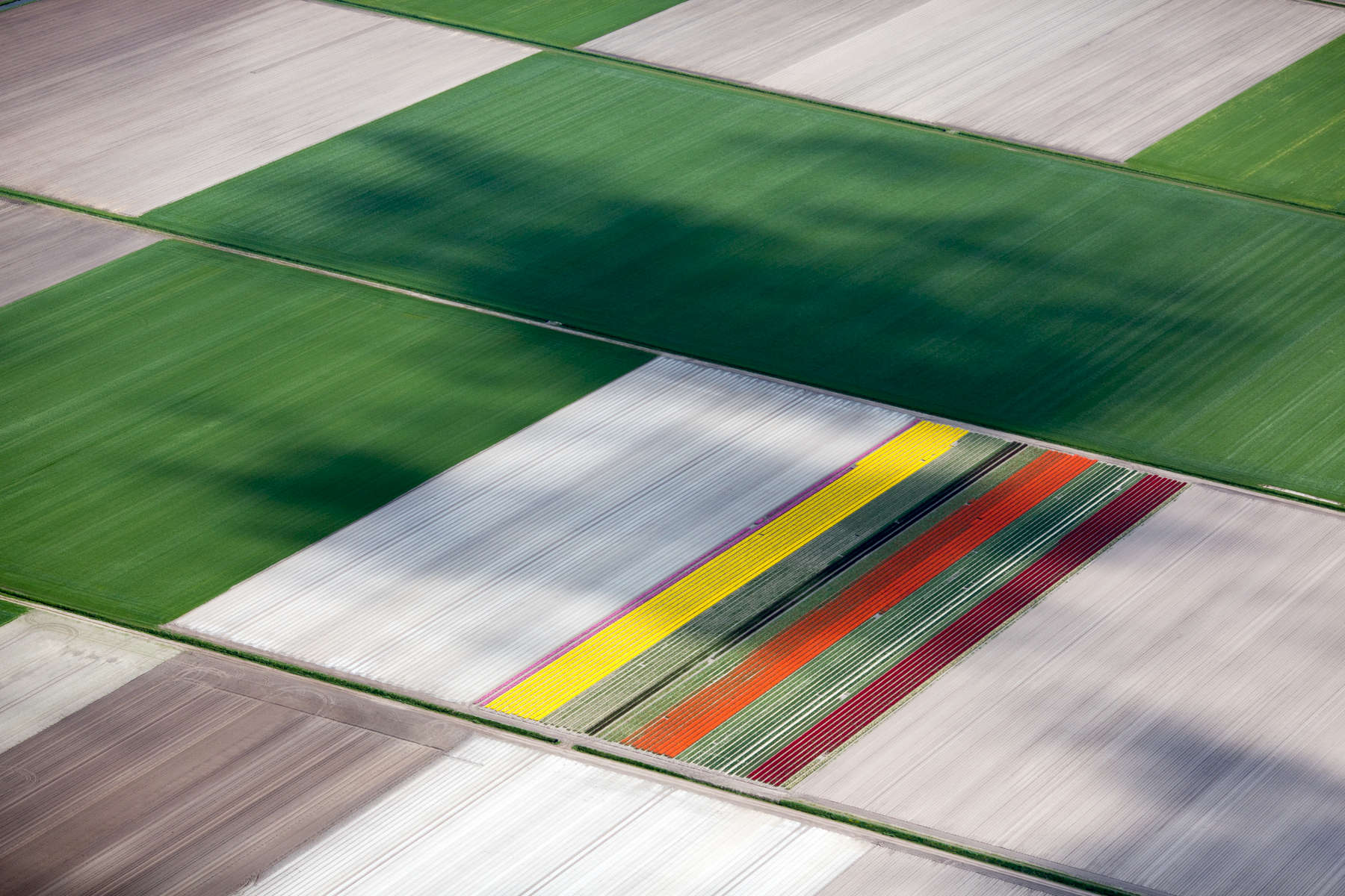 Tulip Patch, Netherlands 2015 (150502-0116)