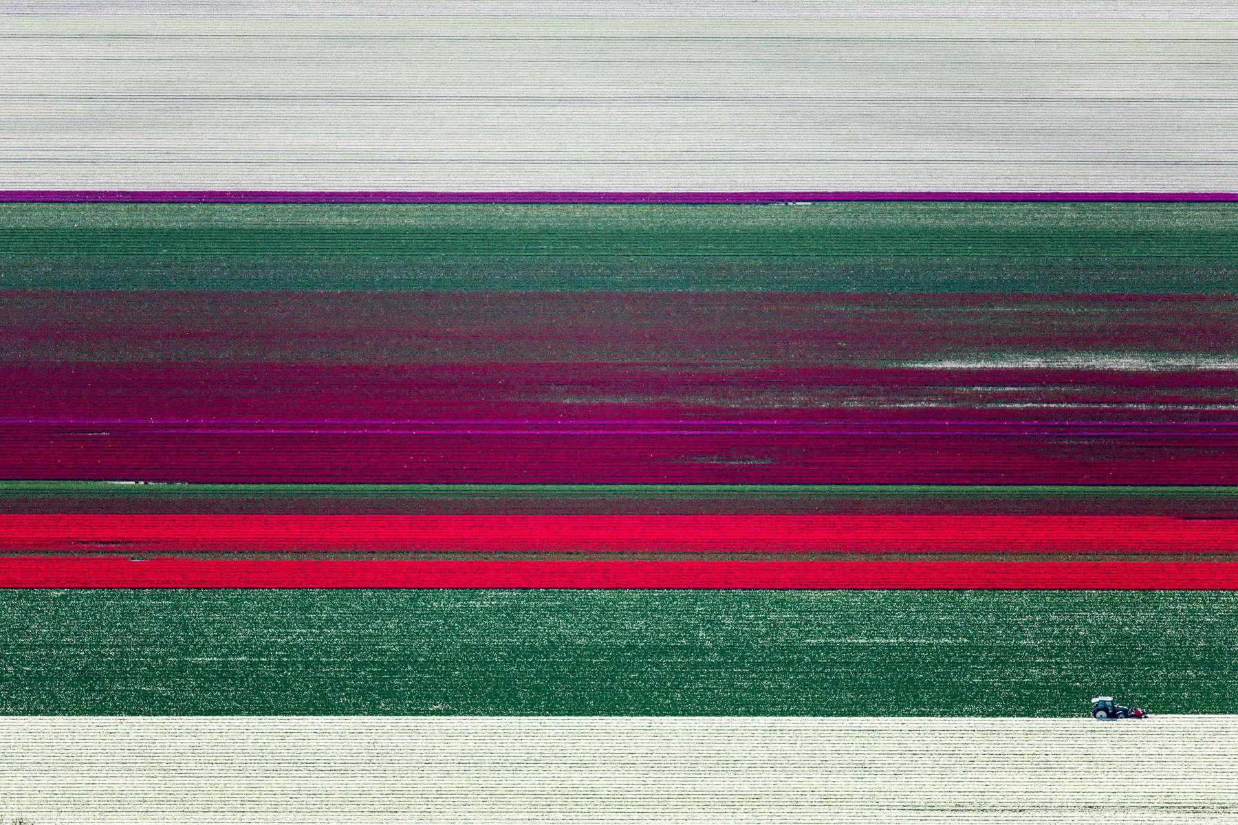 Tulip Topping, Rutten, Netherlands 2015 (150502-0232)