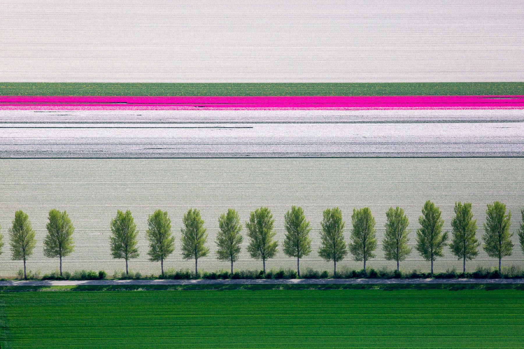 Tulip and Tree Rows, Creil, Netherlands 2015 (150510-0191)