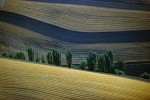 Plowed Wheat fields on the PalousePullman Area, WashingtonRef #: LS_4419_18