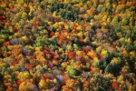 Mixed Hardwood Forest in AutumnUpstate New YorkRef #: LS_5528_26