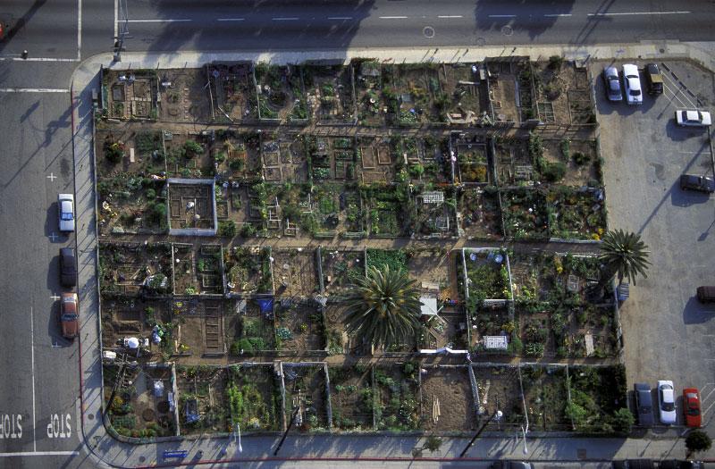 Community Garden Plotssanta Monica Californiafilm Ref Ls_5377_06 Community  Garden Plots