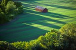 Tobbaco Barn in Field with Long Shadows, Hadley, MA 1990 (LS_4466_19)