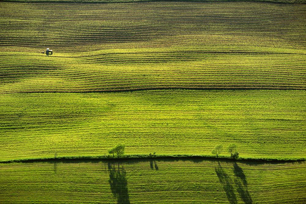 Winnowed Hay Fields, Browns Corners, Vermont (LS_8007_25)