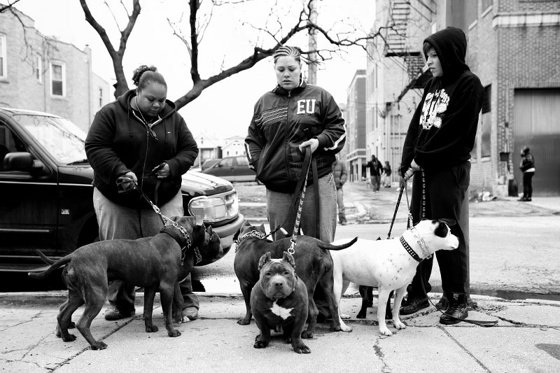 A crowd of pit bulls and their owners turn out for free rabies vaccines at an event sponsored by the Humane Society of the United States. Home to a large Puerto Rican population, Humboldt Park has seen gentrification change the face of the neighborhood as whites from wealthier areas of the city take advantage of lower rents and larger living spaces.
