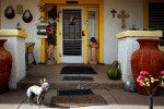 Guard dog in Marfa, TX