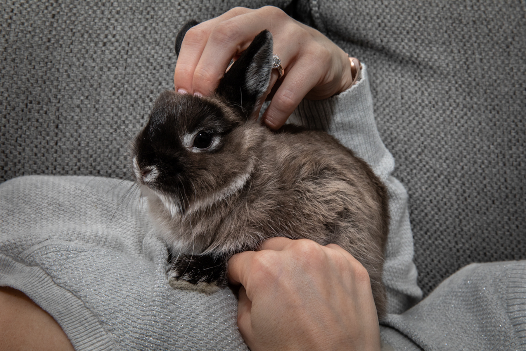 Pierce the rabbit
