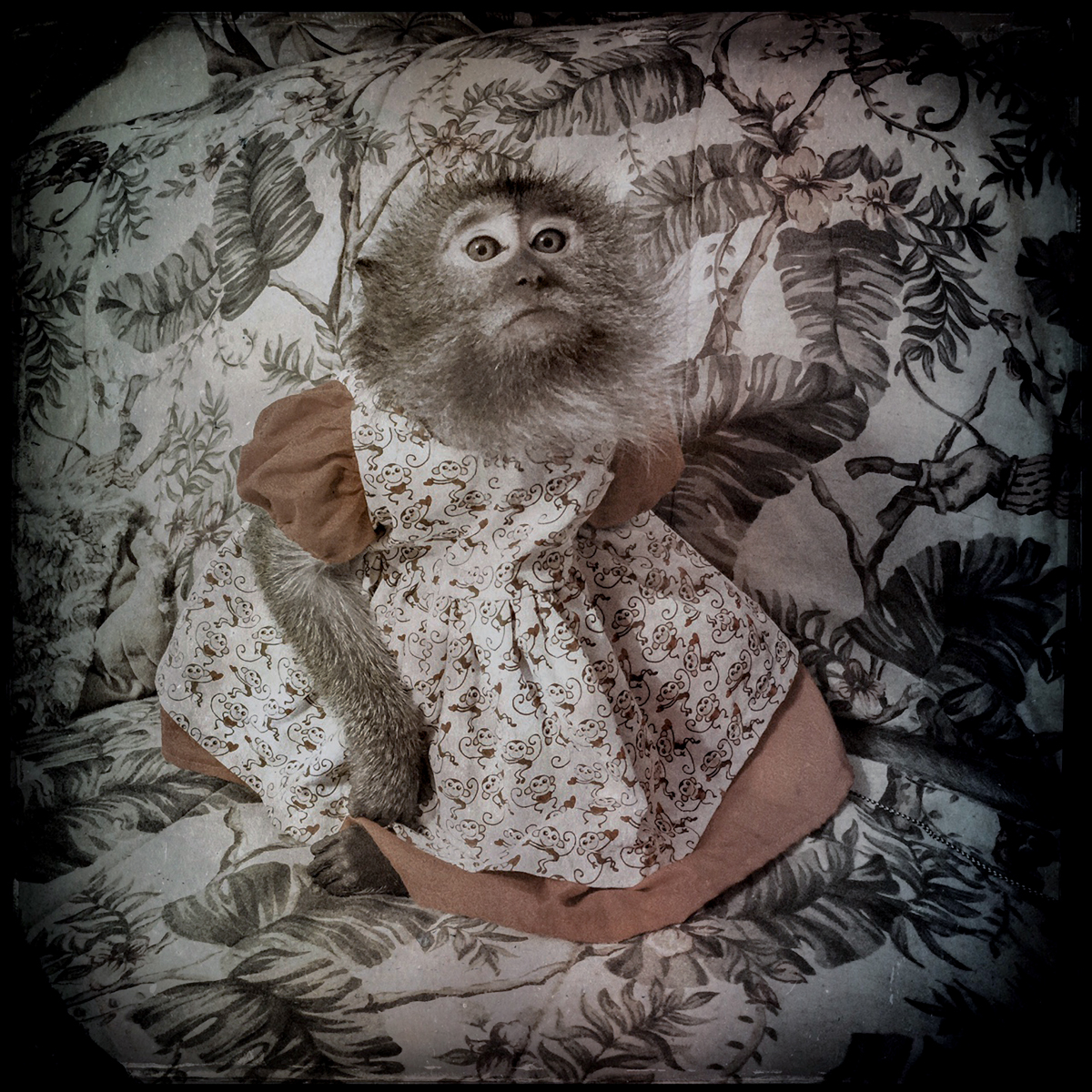 3000-babymonkeydress_robinschwartz-copyN_RobinSchwartz
