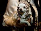At Roaring Twenties Pet Fashion Show by Tropiclean