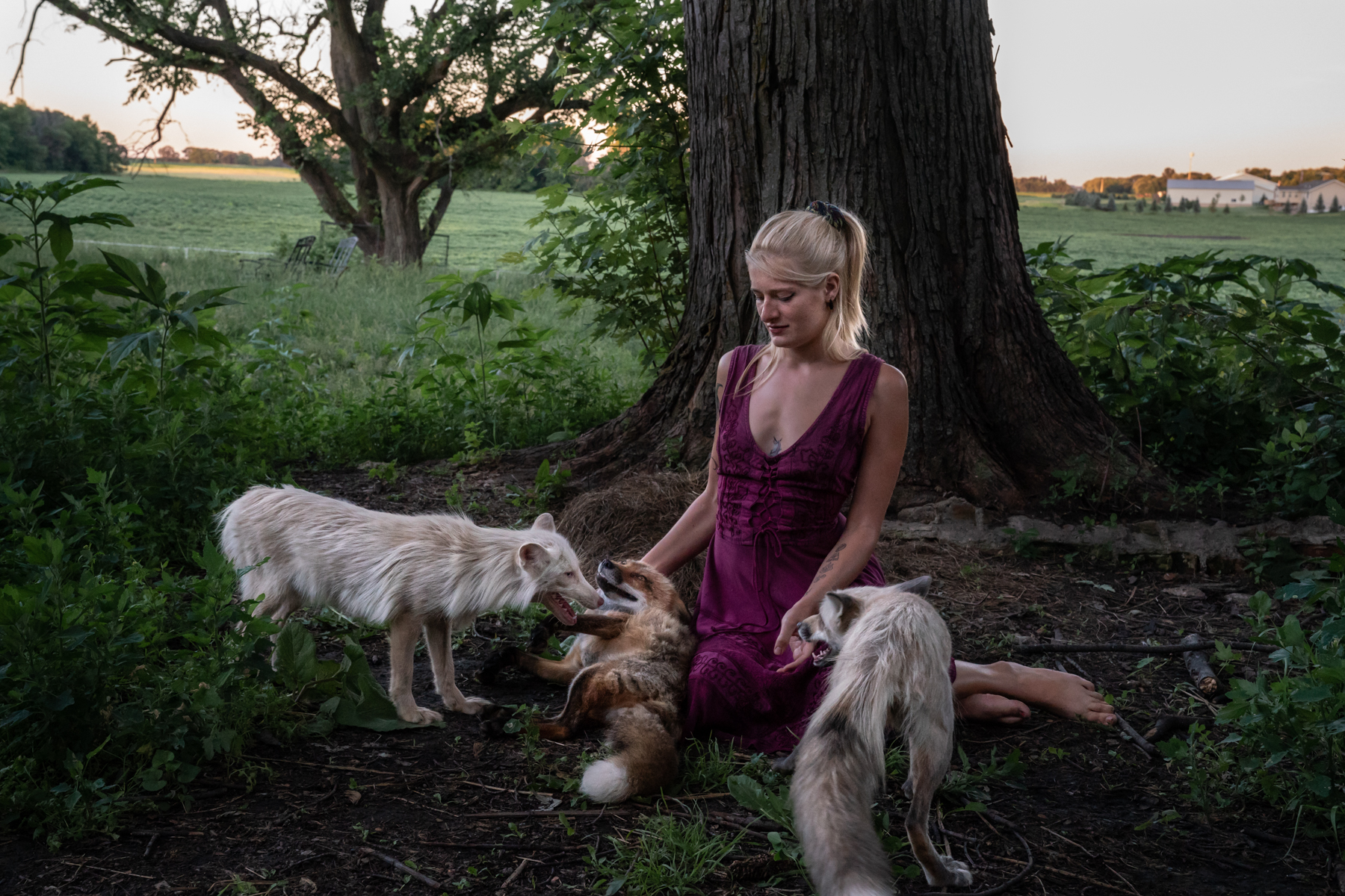"Foxes surround Raines, their rescuer, as she sits in front of an oak tree on her property. ""I was fascinated by how Mikayla held court with the foxes,"" Schwartz says."
