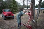 Dr. Pol Gutting Deer - Road Kill