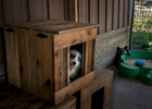 A newly rescued fox named Luka is confined to his enclosure while she acclimates to the new environment. Raines leaves toys because foxes to help satisfy their curiosity.