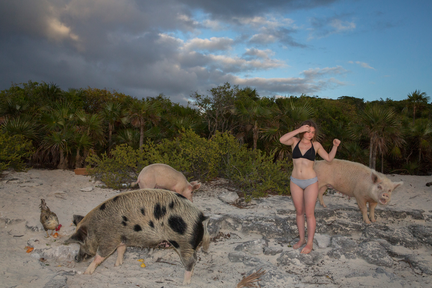 New York Times Magazine, Bahama Swimming Pigs