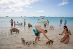 Major Cay Pigs & Tourists