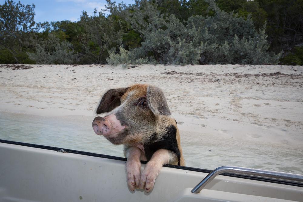 Momma Pig
