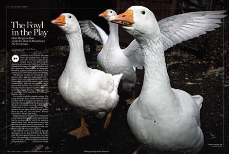 New York Magazine in Print and online: The Ferryman / Broadway November 28, 2018 How The Ferryman Wrangles Its Onstage Goose Theatrical Animals by Bill Berloni: theatricalanimals.com