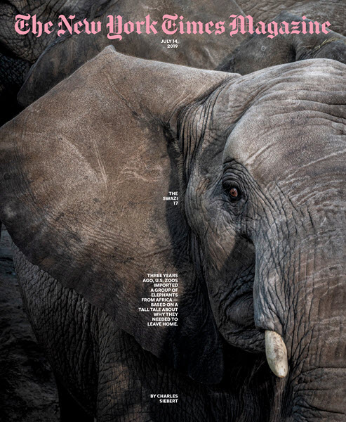 Zoos Called It a 'Rescue.' But Are the Elephants Really Better Off? July 14, 2019 New York Times Magazine Feature