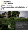 National Geographic: Best Animal Photos of 2019 Honored to have my photograph included with such incredible photographers's photos. See the story.
