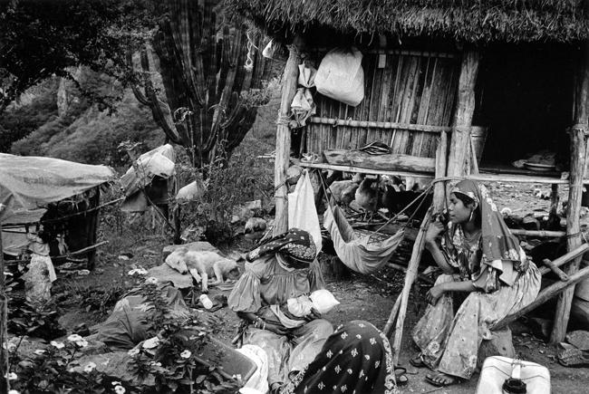Nursing Mothers and Sleeping Dog, Huicoles, Sierra