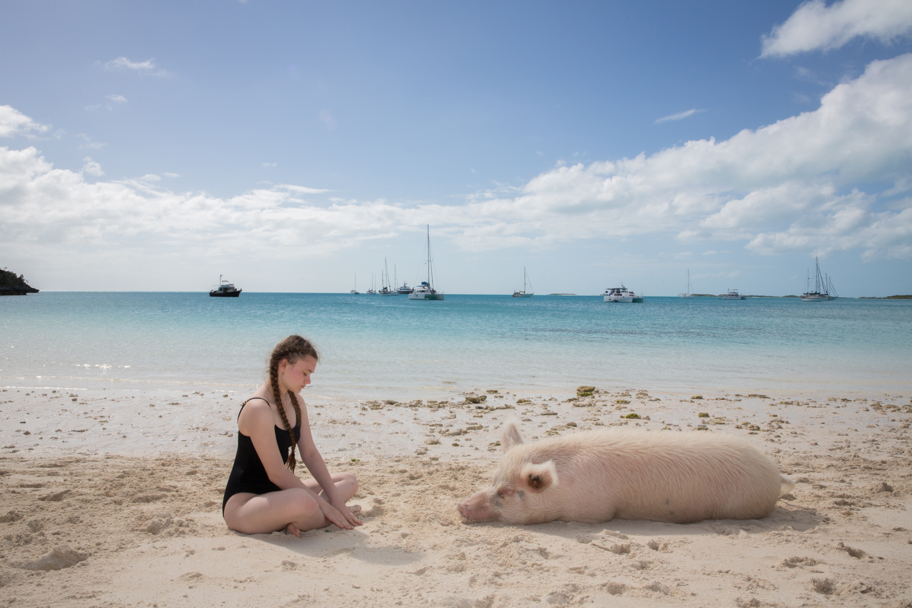 New York Times Magazine Bahama Pigs