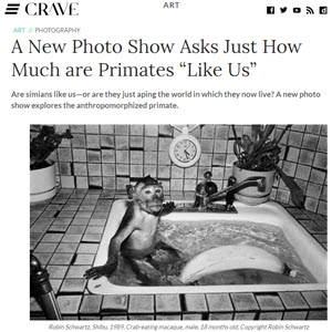 CRAVE  - review: A New Photo Show Asks Just How Much are Primates {quote}LIke Us{quote}