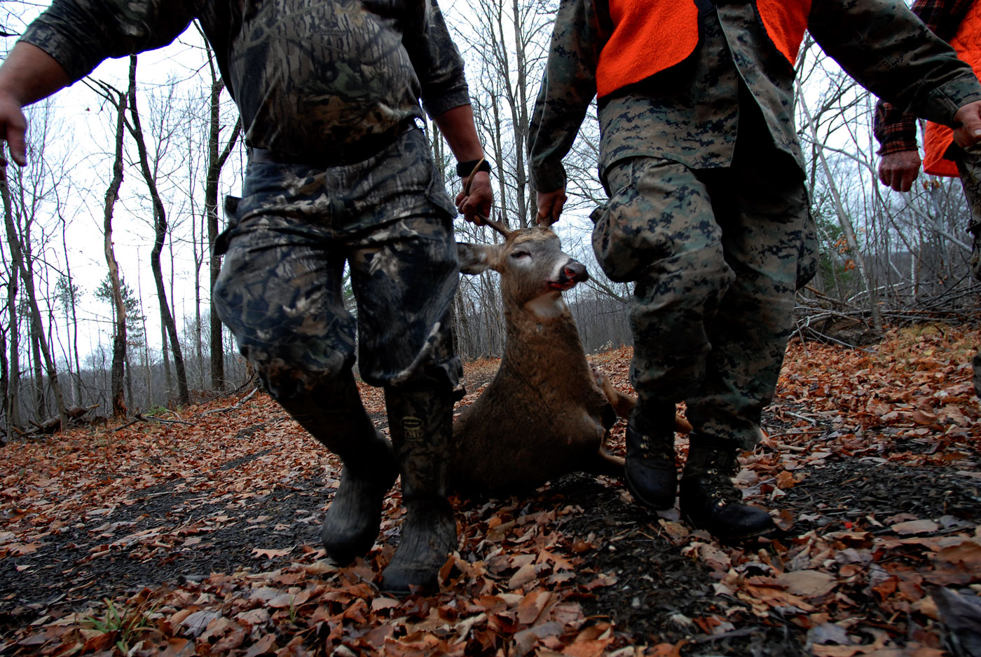 Tim Irwin and Don Joy carry out a deer from the woods that was killed by Bob Vezina, The food harvested from this deer will serve numerous meals to the families of all three hunters.