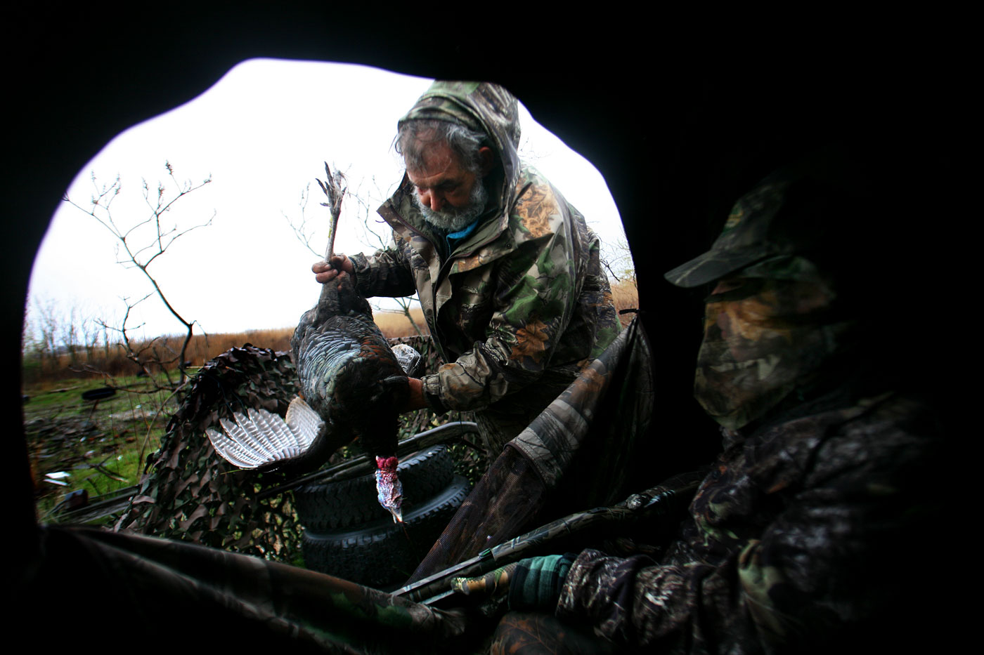 Frank Wasylink looks over a turkey that was shot by his son, Frank, Jr., during opening day of Turkey Hunting Season on a private property in Stratford, Connecticut. Mr. Wasylink is a senior hunter safety instructor with the Connecticut Department of Environmental Protection. The turkey, which is about one-years-old, will provide about 4 famaily meals for the Wasylinks. The son and father were out enjoying opening day together and only one shot was fired the entire day, the one that put down this turkey by Frank, Jr. Frank, Sr., like many other hunters, views the opportunity to hunt with their family as a chance to spend quality time together - not only to grow closer together as a family, but also a chance to learn about nature and nature conservancy.