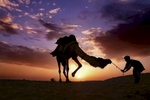 A Rajasthani boy coaxes his camel to rest as the sun sets over the Thar Desert in India.
