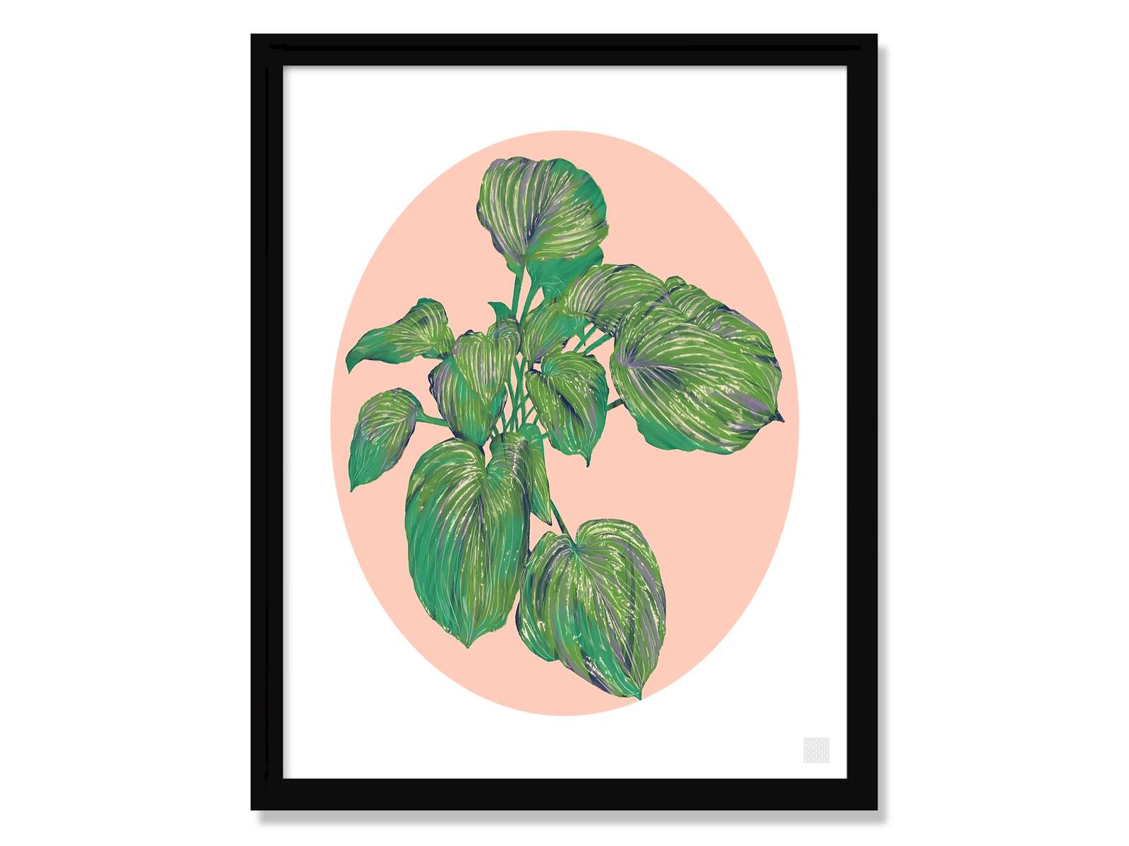 THE HOSTA WITH THE MOSTA : Click here to PURCHASE PRINTS