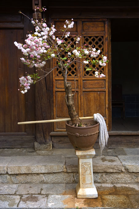mop and a cherry treeoutside the Weaving MuseumOld Town - Lijiang