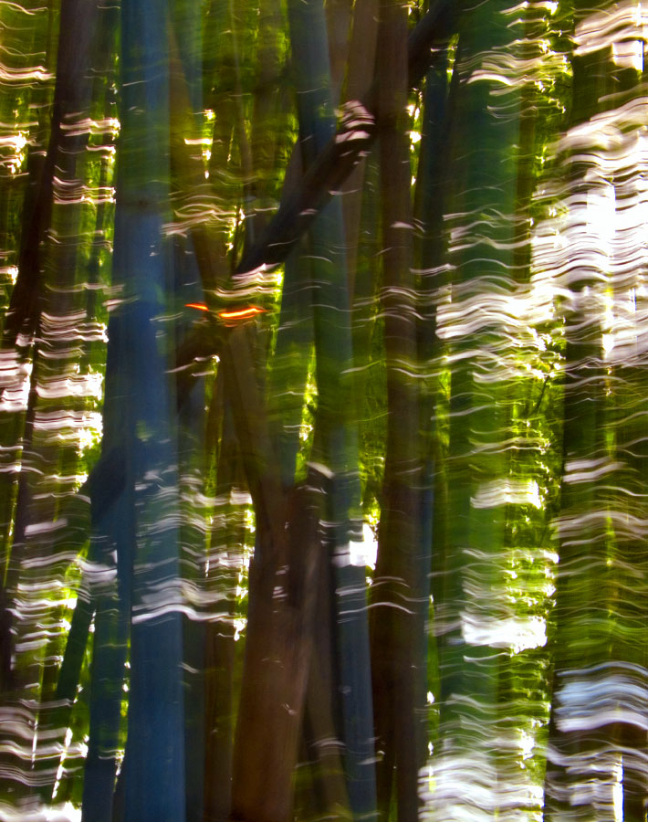 bamboo in the windRepulse Bay, Hong Kong