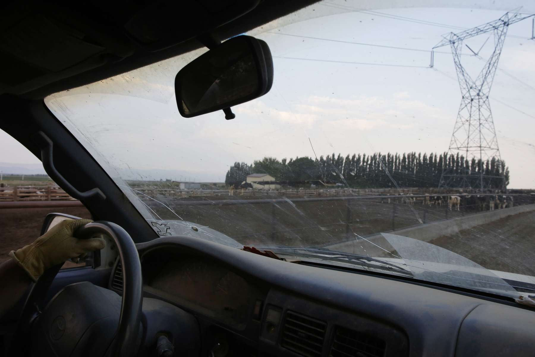 "Eloy Cervantes, a cattle rancher and father of four, drives a truck as he makes his rounds feeding cattle at his job in Mattawa, Washington August 23, 2013. Cervantes, who is not a United States citizen, has staked his family's future on this remote farming city in America's apple country — a city riddled by troubles he wishes he could help fix. Teen pregnancy. Grating poverty. And violent gangs that shot bullet holes into his neighbors' trailers. ""If I could do something,"" Cervantes, 40, said of the troubles in town, ""you can be sure that I would."""