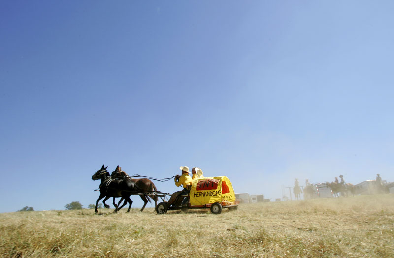 A team competes in the mule race at the National Championship Chuckwagon Races in Clinton, Arkansas September 1, 2007.