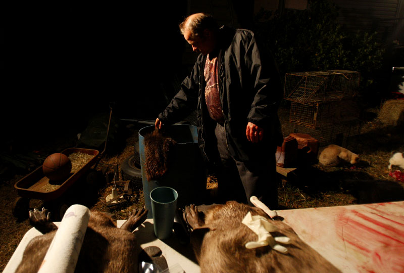 Trapper Harold Renfro places a beaver pelt in a barrel after skinning a beaver at his home in Sacul, Texas December 6, 2008.
