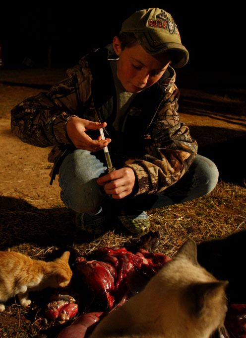 Aaron Renfro, 13, collects urine from the carcass of a beaver which will be used to trap other beavers in Sacul, Texas December 6, 2008.