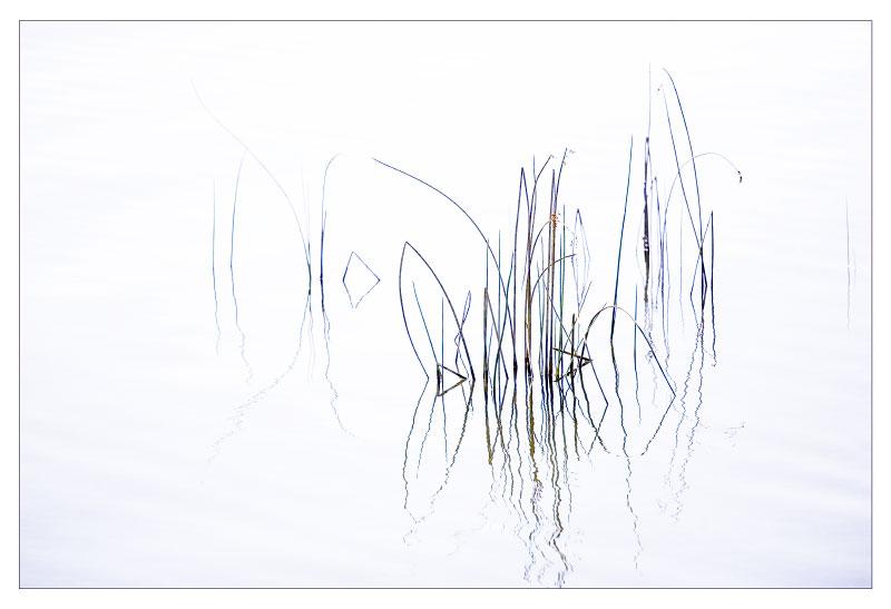 0765_reeds