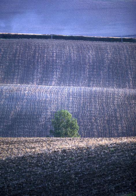 Corduroy field No. 2, France