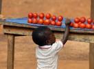 Tomato temptationGhana