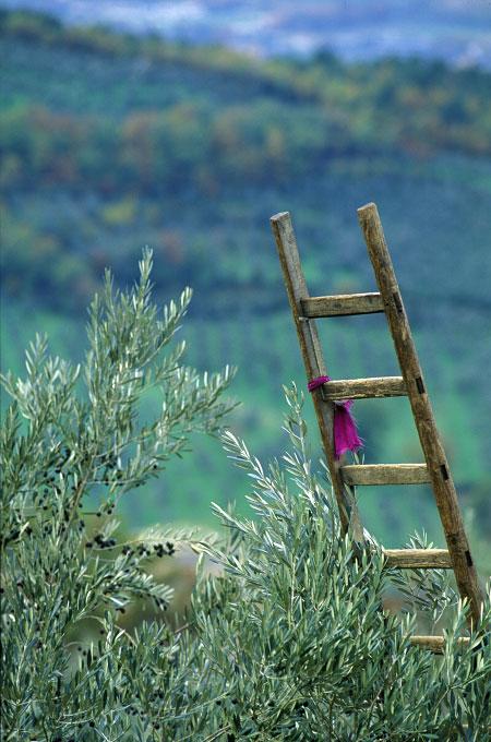 Olives010