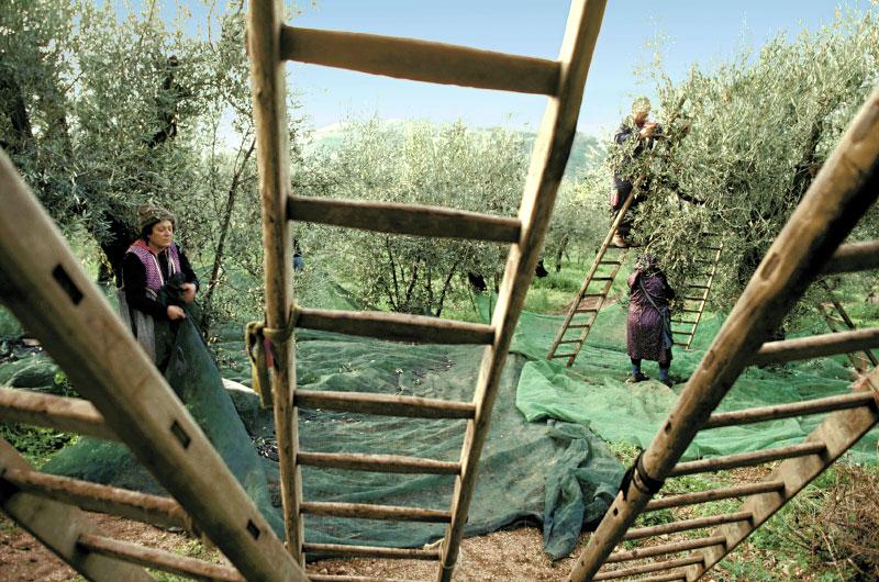 Olives02